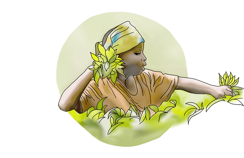 Illustration of a tea farmer